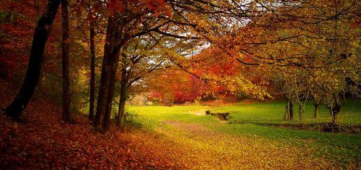 autunno parco